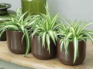 Grande Plante D Intérieur Facile D Entretien : des plantes aux vertus d polluantes pour votre int rieur ~ Premium-room.com Idées de Décoration