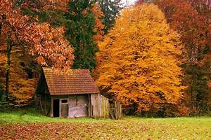 Beautiful, House, In, The, Middle, Forest