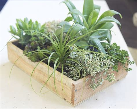 How To Plant A Vertical Succulent Garden by Best 25 Vertical Succulent Gardens Ideas On