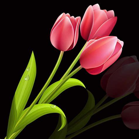 Tulip Flower Image by Tulip Flower Plant 183 Free Image On Pixabay