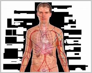 Body Diagram Male