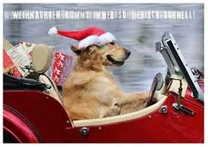 lustige kalendersprüche lustige weihnachtskarte mit hund mit weihnachtsmannmütze www spruechetante de