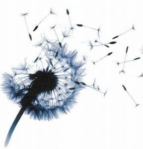Pusteblume Schwarz Weiß Vögel : suchergebnisse f r 39 pusteblume 39 tattoos tattoo lass deine tattoos bewerten ~ Orissabook.com Haus und Dekorationen