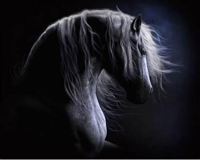 Horse Paarden Cheval Chevaux Plaatjes Gifs Horses