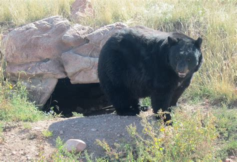 bear country usa wildlife park posted