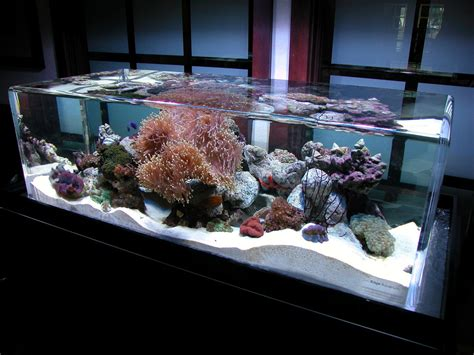 zeroedge classic 46 aquariumcustom aquariums fish tanks filtration zeroedge
