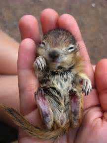 super cute hand sized baby animals part