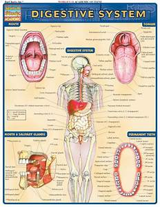 77 Best The Digestive System Images On Pinterest