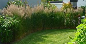 Sichtschutz Pflanzen Pflegeleicht : hammes kramp sichtschutz ~ A.2002-acura-tl-radio.info Haus und Dekorationen