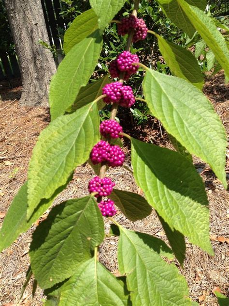 21 Best Plants Native To South Carolina Images On
