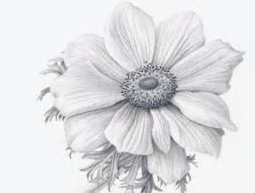 Realistic Flower Drawings