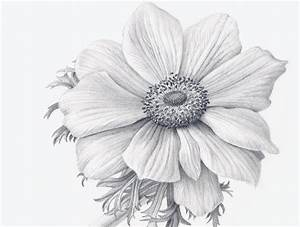 Pencil Drawings: Pencil Drawing Realistic Flowers