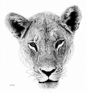 Lion Drawing | scottwoyak | Pinterest | Lion drawing, Lion ...