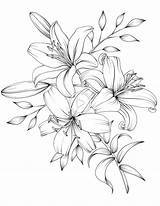 Drawing Bouquet Tattoo Pencil Sketch Floral Blumen Flowers Drawings Coloring Flores Adult Printable Pdf Lily Tattoos Zeichnen Sketches Lilies Botanicum sketch template