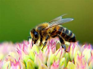 12 Interesting Facts About Bees