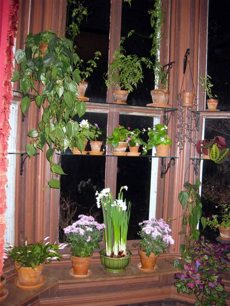 Plants On Windows by Colorful Plants For Autumn Windows