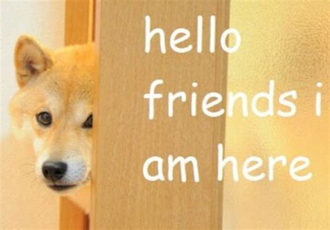 Doge GIFs: 23 Of The Funniest Animated Doge GIFs