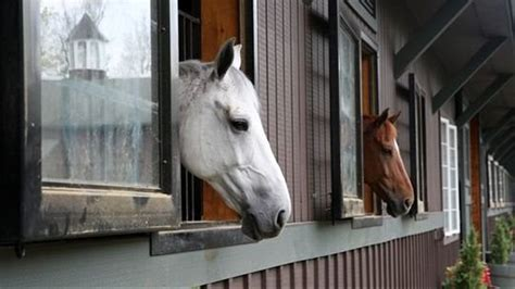 Airbnb for horses? New online platform helps equestrians ...