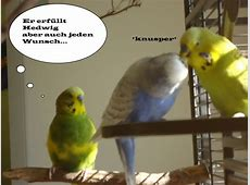 Hedwig und Buddha ein Comic WellensittichBlog Welli