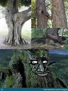 Treebeard Approves By Recyclebin Meme Center