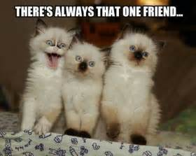 friends of cats there s always that one friend giantgag