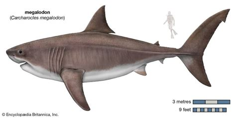 History's Largest Predator That Mysteriously