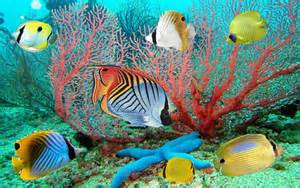 Free Moving Fish Desktop Backgrounds