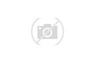 Colorado Wildlife Animals