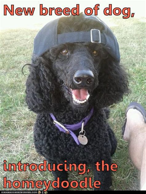 breed  dog    hotdog dog pictures funny