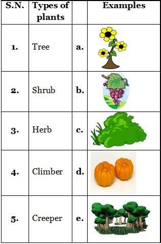 types of plants practice sheets for science grade 2 cbse