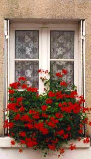 French Window Flower Boxes