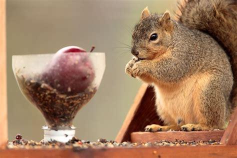 wetland explorer squirrels offer winter entertainment