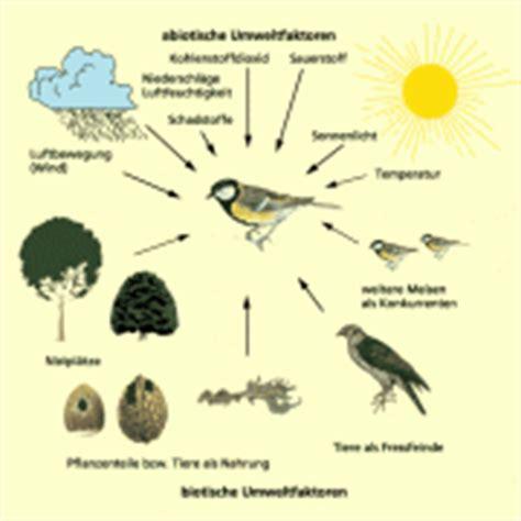 Licht Als Abiotischer Umweltfaktor by 214 Kologie In Biologie Sch 252 Lerlexikon Lernhelfer
