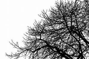 Stickers Arbre Noir : sticker deco murale arbre noir et blanc 2 ~ Teatrodelosmanantiales.com Idées de Décoration