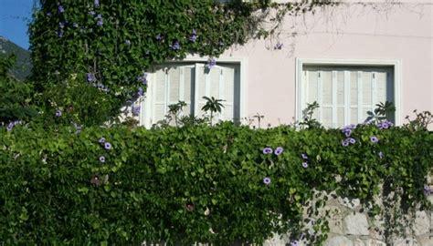 Piante Per Coprire Muri coprire pareti con piante utilizzare piante ricanti sul