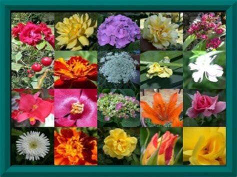 tipi di fiori elenco raccolta di esercizi on line maestra