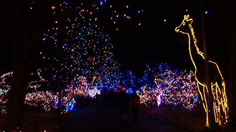 how much does zoo lights cost in phoenix denver zoo of lights photos denver zoo lights the denver