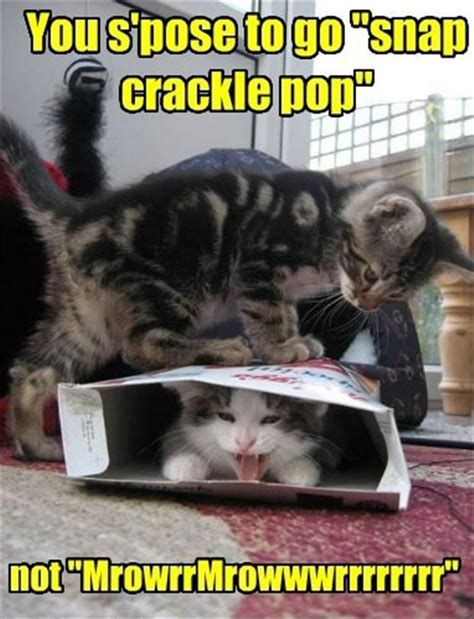 funny cat pictures  captions  funny cat pictures