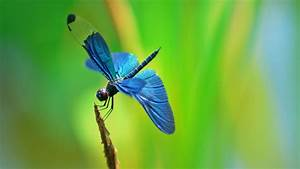 Dragonfly Insect | Quote Addicts