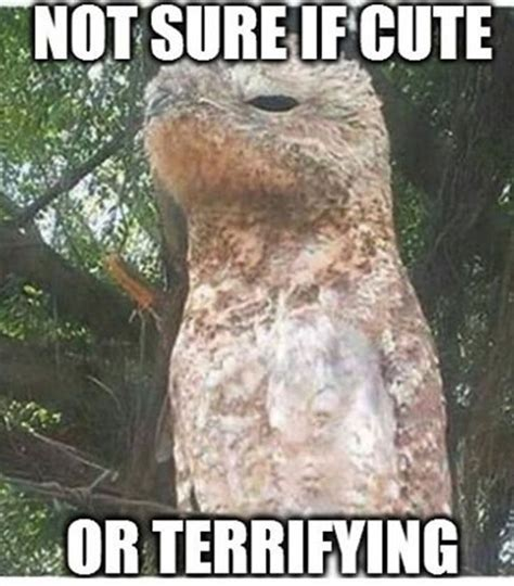 Potoo Bird Meme - 319 best animal memes images on pinterest animal memes funny animals and funny animal