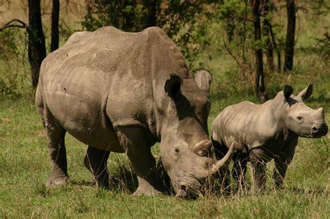 spectacular kenyan safari escape  couples zicasso