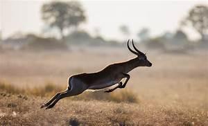 Afrikan Antilope : drive hunt slaughter happening in south africa 7 sept ~ A.2002-acura-tl-radio.info Haus und Dekorationen