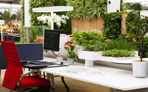 bureau ude environnement les plantes au bureau un investissement payant