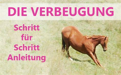 pferd verbeugung pony zirkuslektion pferd pferde und