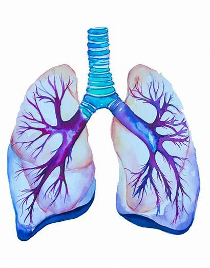 Watercolor Painting Lung Medical Anatomy Paintings
