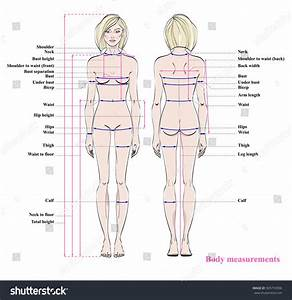 Woman Body Measurement Chart Scheme Measurement Stock