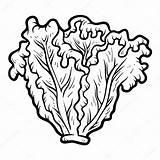 Lettuce Coloring Clipart Alface Clip Colorir Laitue Coloriage Lattuga Malbuch Libro Vector Colorare Worksheet Colorear Lechuga Children Kopfsalat Livro Imagens sketch template