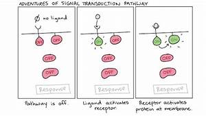 Where Does Transduction Take Place  Where Does