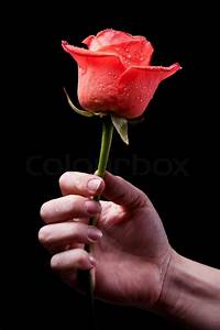 Red rose in hand Stock Photo Colourbox