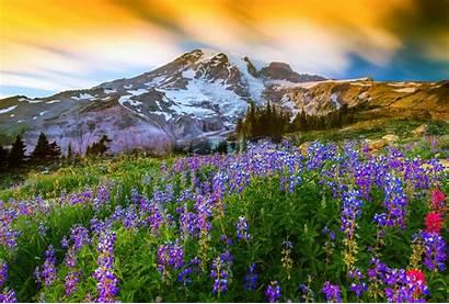 Rainier Mount National Park Mountain Nature Spring